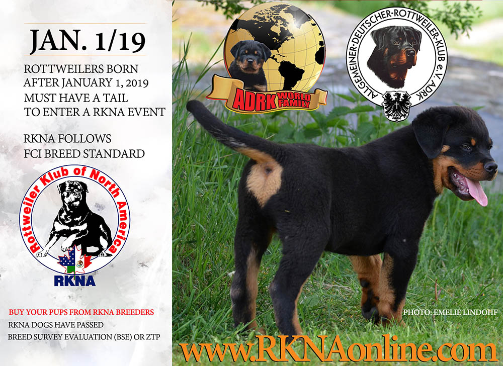 Rottweilers Born After January 1, 2019 Must Have A Tail